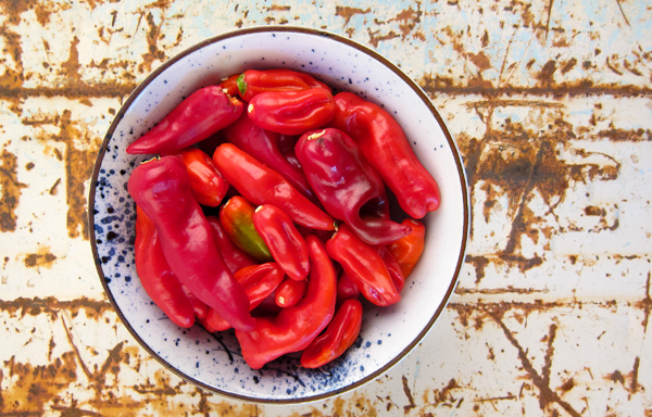 chiles-for-hot-sauce