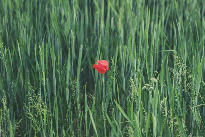«Зеленая пятница» c Weleda